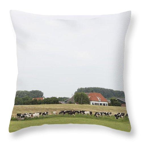 Sheep Dijk Throw Pillow featuring the photograph Sheep Dike In Arnhem by Ronald Jansen