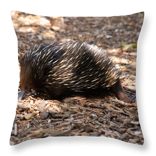 Australia Queensland Qld Throw Pillow featuring the digital art Short-beaked Echidna by Carol Ailles