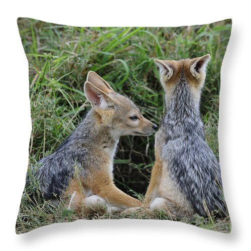 Africa Throw Pillow featuring the photograph Silver-backed Jackal Pups by John Shaw