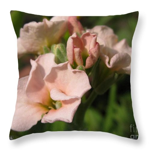 Mccombie Throw Pillow featuring the photograph Single Peach Stocks From The Vintage Mix by J McCombie