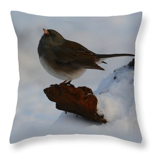 Bird Throw Pillow featuring the photograph Snowbird by Charles Owens
