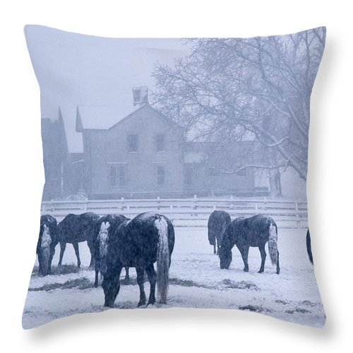 Snow Throw Pillow featuring the photograph Snowfall Corral by Bruce Thompson