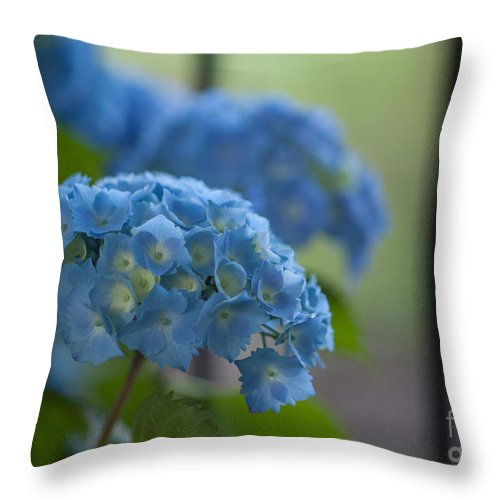 Hydrangea Throw Pillow featuring the photograph Soft Blue Hydrangea by Mike Reid
