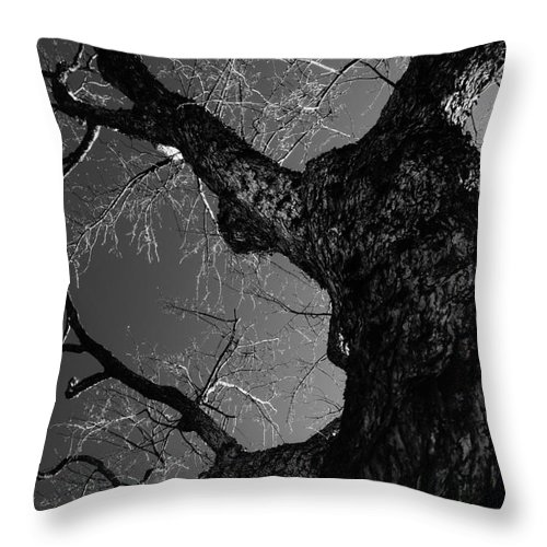 Trees Throw Pillow featuring the photograph Solid by Jeffery L Bowers