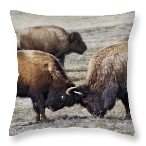 Bison Throw Pillow featuring the photograph Sparring by Carolyn Fox