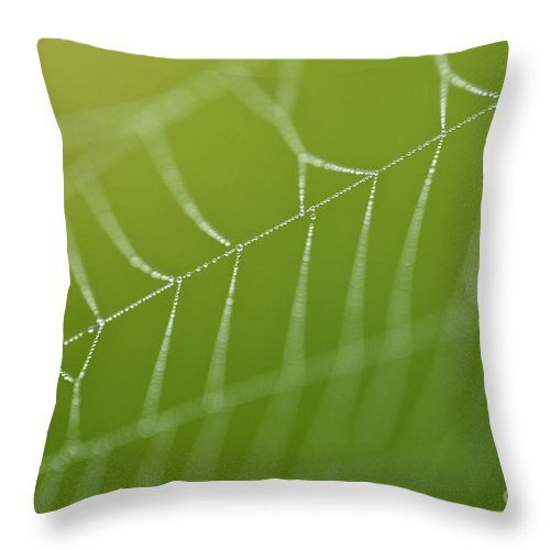Aranae Throw Pillow featuring the photograph Spider Web With Dew Drops by Jim Corwin