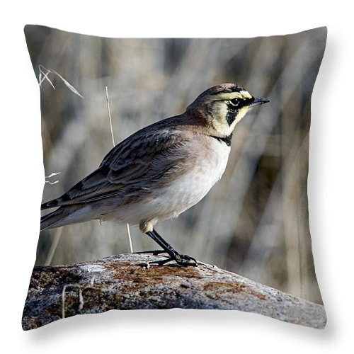 Horned Lark Throw Pillow featuring the photograph Spot Light by Eric Nelson
