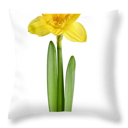 Flower Throw Pillow featuring the photograph Spring Yellow Daffodil by Elena Elisseeva