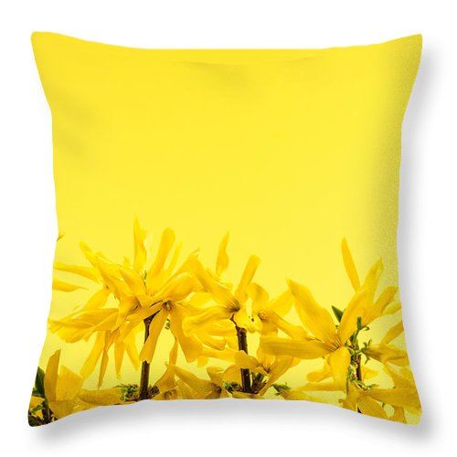 Yellow Throw Pillow featuring the photograph Spring Yellow Forsythia by Elena Elisseeva