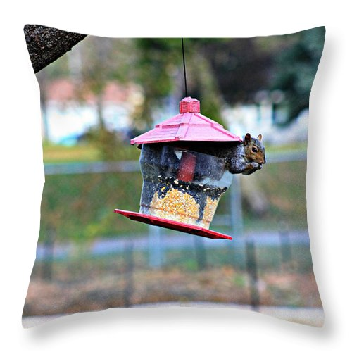 Amanda Stadther Throw Pillow featuring the photograph Squirrel by Amanda Stadther