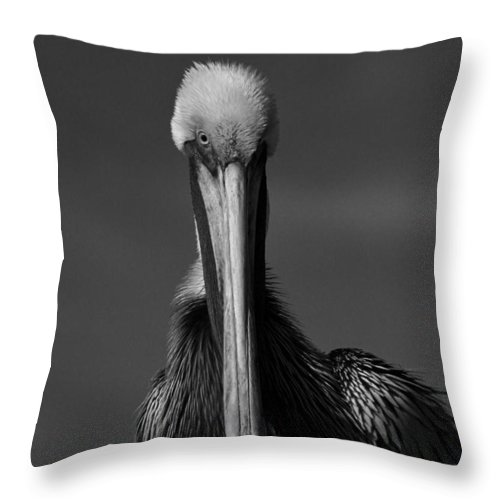 Wildlife Throw Pillow featuring the photograph Stormy Pelican by Bruce Lundgren