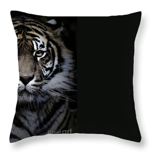 Animal Throw Pillow featuring the photograph Sumatran tiger by Sheila Smart Fine Art Photography