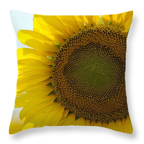 Sunflower Throw Pillow featuring the photograph Sun Kissed by Debby Richards