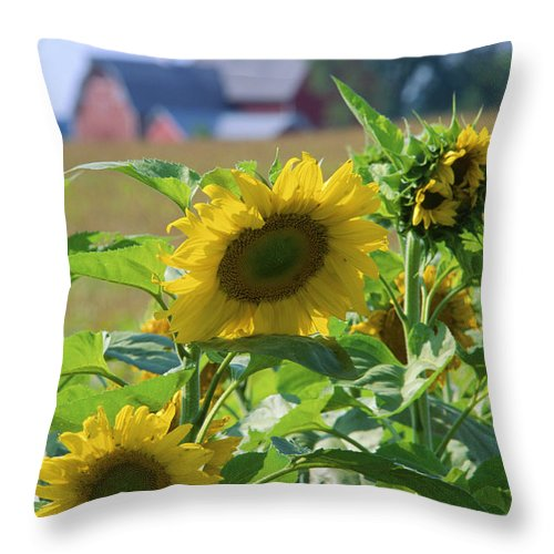 Sunflower Throw Pillow featuring the photograph Sunflower Farm by Bruce Thompson