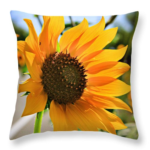 Sunflower Throw Pillow featuring the photograph Sunflower by Shawn McMillan