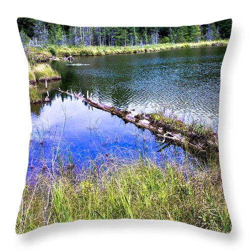 Swamp Throw Pillow featuring the photograph Swamp by Sherman Perry