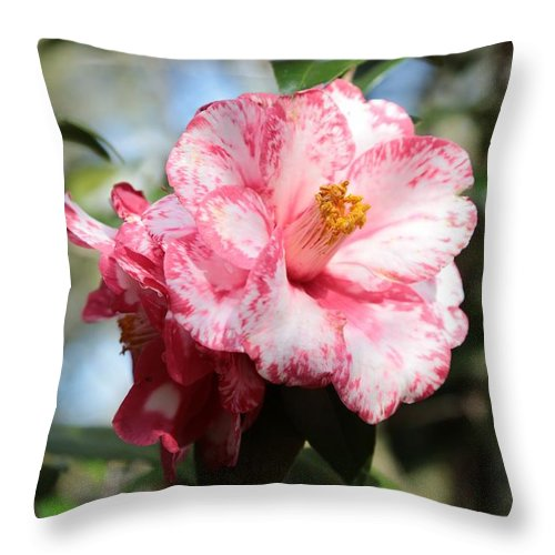 Camellia Throw Pillow featuring the photograph Sweet Camellia by Carol Groenen