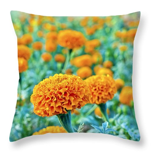 Tagetes Erecta Throw Pillow featuring the photograph Tagetes Erecta / Aztec Marigold Flower by Image World