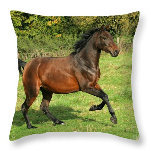 Horse Throw Pillow featuring the photograph Take-off by Angel Ciesniarska