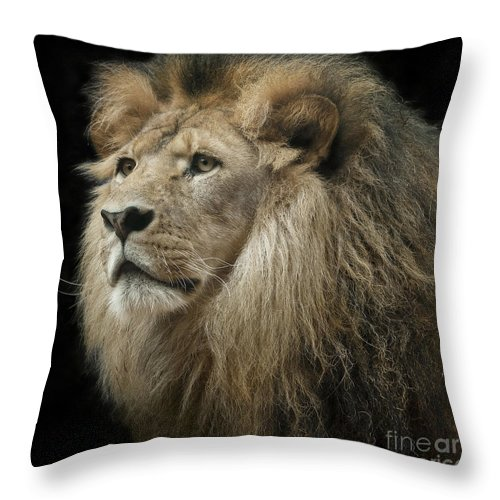 Resting Throw Pillow featuring the photograph The King by Linda D Lester