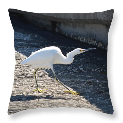 Snowy Egret Throw Pillow featuring the photograph The Strut by Linda Kerkau