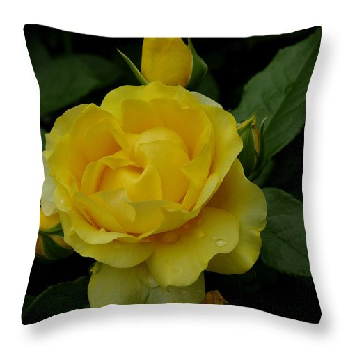 Rose Throw Pillow featuring the photograph Yellow Rose Of Summer by James C Thomas