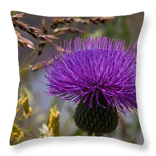 Thistle Throw Pillow featuring the photograph Thistle by Mark Alder