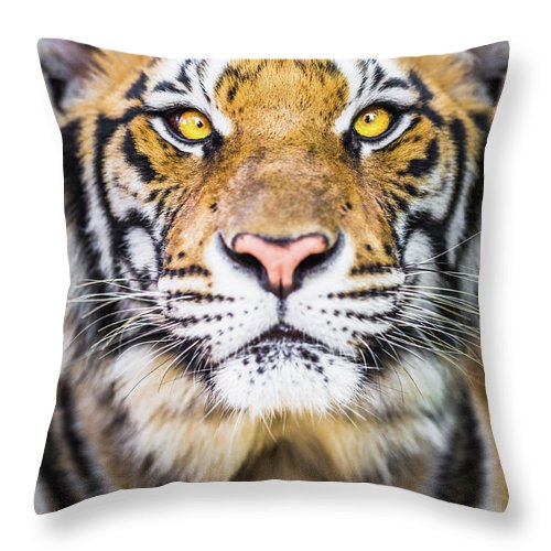 Tiger Throw Pillow For Sale By Deimagine