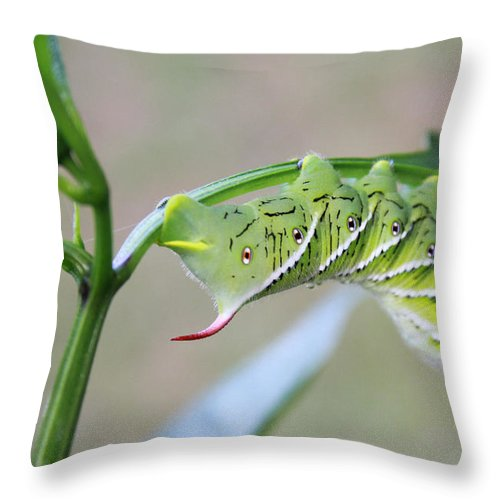 Kelly Hazel Throw Pillow featuring the photograph Tobacco Hornworm by Kelly Hazel