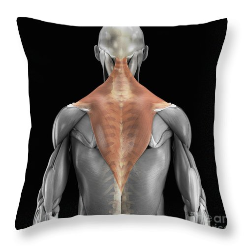 3d Visualisation Throw Pillow featuring the photograph Trapezius Muscle With Skeleton by Science Picture Co