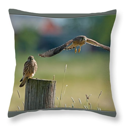 Two Of A Kind Leaving One Behind Throw Pillow featuring the photograph Two Of A Kind Leaving One Behind by Torbjorn Swenelius