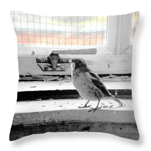 Photography Throw Pillow featuring the photograph Under Arrest by Munir Alawi