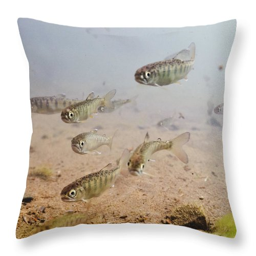 Group Throw Pillow featuring the photograph Underwater View Of Coho Salmon by Thomas Kline