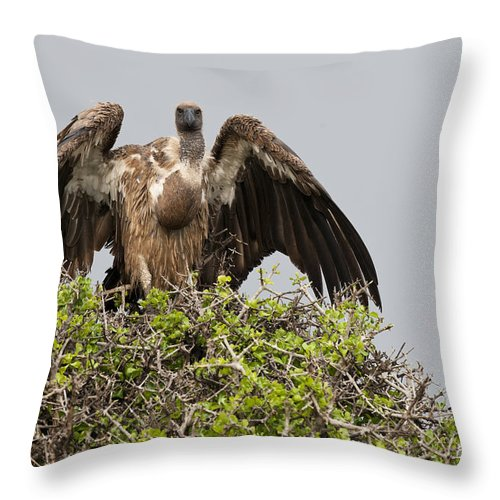 African Fauna Throw Pillow featuring the photograph Vultures With Full Crops by John Shaw