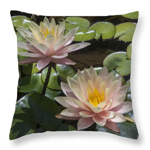 Flowers Throw Pillow featuring the photograph Water Lilies by Bruce Frye
