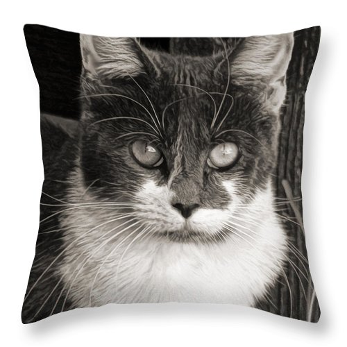 Stare Throw Pillow featuring the photograph We Are Not Amused by Lin Haring