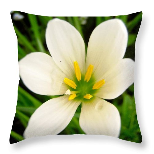 Flower Throw Pillow featuring the photograph White Flower by Stephanie Moore