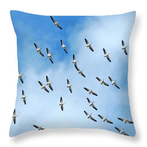 Watercolor Throw Pillow featuring the photograph White Pelican Sky by Deborah Smith