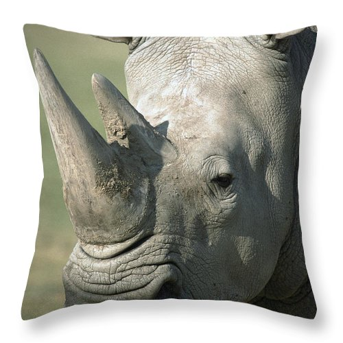 Feb0514 Throw Pillow featuring the photograph White Rhinoceros Portrait by San Diego Zoo