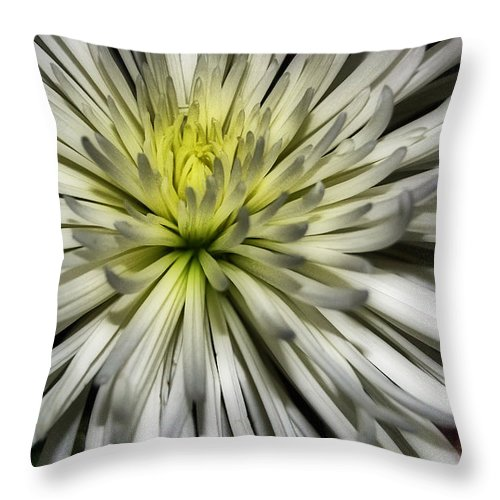 Pictures Of Flowers Throw Pillow featuring the photograph White by Skip Willits