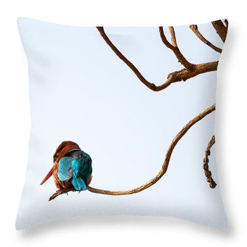 Smyrna Kingfisher Throw Pillow featuring the photograph White-throated Kingfisher by Gaurav Singh