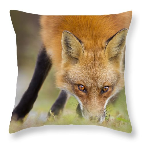 Wild Throw Pillow featuring the photograph Wild Eyes by Mircea Costina Photography
