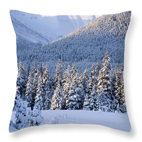 Day Throw Pillow featuring the photograph Winter Scenic Of Snowcovered Spruce by Jeff Schultz