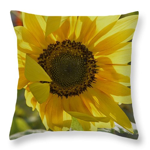 Wildflowers Throw Pillow featuring the photograph Yellow Sunflower by Roy Thoman