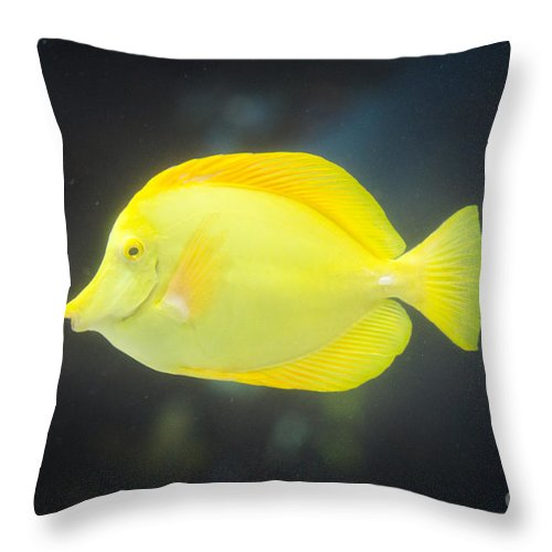 Fish Throw Pillow featuring the photograph Yellow Tang by Shaun Wilkinson
