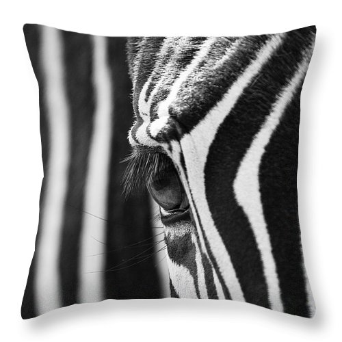 Lisa Cockrell Throw Pillow featuring the photograph Zebra Eye by Lisa Cockrell