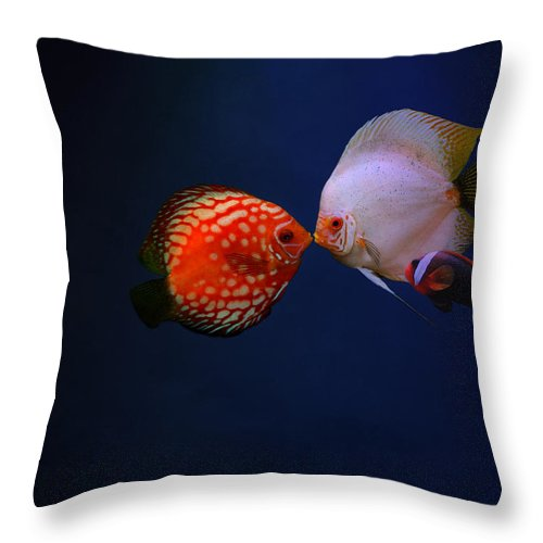 Clown Fish Throw Pillow featuring the photograph Love by Heike Hultsch