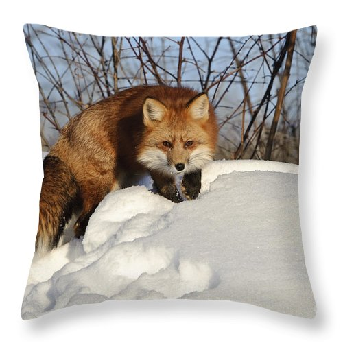 Minnesota Fauna Throw Pillow featuring the photograph Red Fox by John Shaw