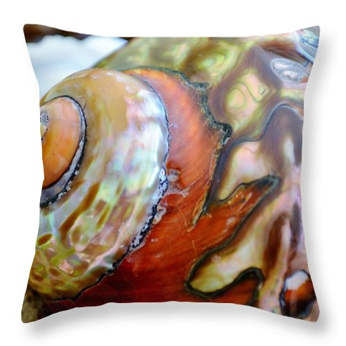Sea Snail Shell Throw Pillow For Sale By Werner Lehmann 20 X 20