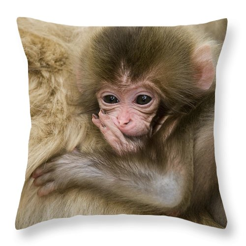 Asia Throw Pillow featuring the photograph Baby Snow Monkey, Japan by John Shaw